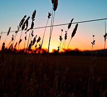 Shadow Plains by Josh Prior