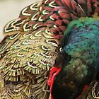 Preening Pheasent by Bryony Griffiths