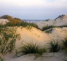 South Padre Island Sand Dune by Mike Norton