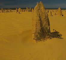 Pinnacles Cervantes WA by Daniel Fitzgerald