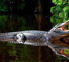 Hungry Gator by sawatts