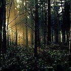Millington Woods by Annique Albericci