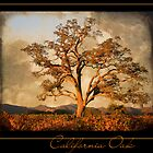 California Oak by bettywiley