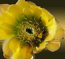 Yellow Desert Cactus by Lucinda Walter