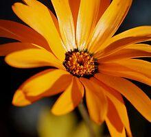 A flower (Is it wooden sunflower or not) by loiteke