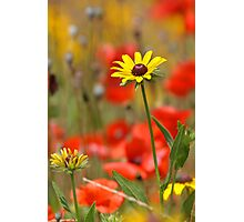 Flower Garden Photographic Print