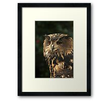 Portrait of an Eagle-owl  Framed Print