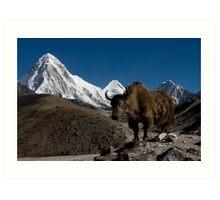 Wild Yak in the Himalayas Art Print