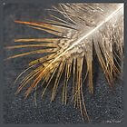 Feathers by Mary Campbell