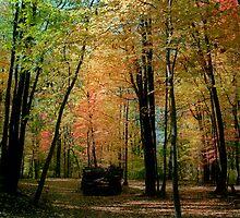 Dark Woods by Doug Greenwald