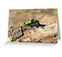Western Spotted Cucumber Beetle ~ Adult Greeting Card