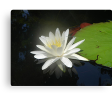 Waterlily with Damselfly Canvas Print
