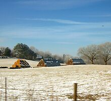 WINTER COUNTRY SCENE by trisha22