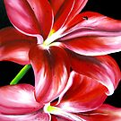 """Lilies on black"" Floral series 2010 by Taniakay"