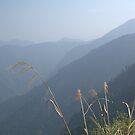Smoky hills - Jade Mountain by Ryan Bird