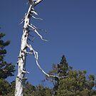 bare white - jade mountain by Ryan Bird