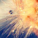 fireworks in my garden by faithie