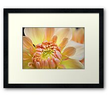 Touch of Orange Framed Print