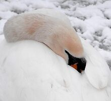 Swan in the Snow! by Laura McDonald