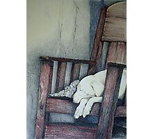 Sleeping Dog in Panama Photographic Print