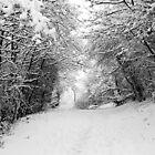 Snow Path by Stephen Robinson