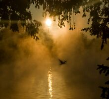 Morning fog by Béla Török