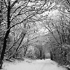 Snow Walk by Stephen Robinson