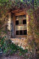 Covered in Ivy by Sue  Cullumber