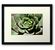 Shadows of Cactus Framed Print