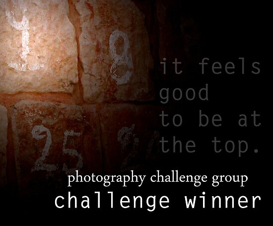 Photography Challenge Group Winner Banner by Vanessa Nebenfuhr