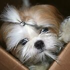 Lola in a box.  by Alexandra Wise-Brogna