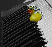 Duck on a keyboard by James Millward