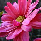 Hot Pink Lover by Dana Yoachum