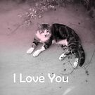 Cat I Love You Card  by Melissa Park