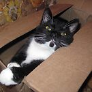 Boxed Oreo by Virginia Shutters