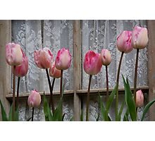 Spring Tulips and Lace Photographic Print
