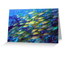 Coral and a school of fish Greeting Card
