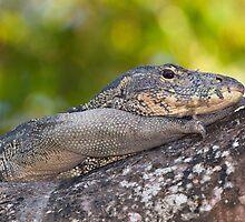 Monitor lizard by tara-leigh