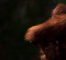 Orangutan light by tara-leigh