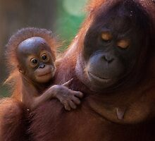 Female Orangutan and her baby by tara-leigh