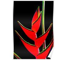 Tropicana - caribea flower Poster