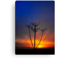 Sunset and Grass Canvas Print