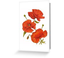 Poppies on White Greeting Card