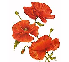 Poppies on White Photographic Print