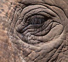 Eye of the Elephant by tara-leigh