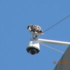 Another favorite perch for the Rhode Island Hospital Red-Tailed Hawk by deborahpuerini