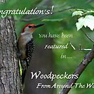 Male Red-bellied Woodpecker ~ Melanerpes carolinus  Banner by Bonnie Robert