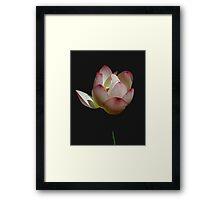 Peace Petals Framed Print