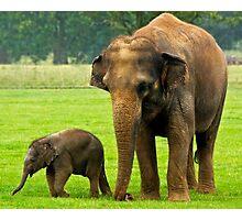 Elephant and Calf Photographic Print