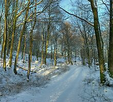 Winter at High Dam, Finsthwaite by VoluntaryRanger